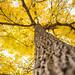 10.18.16 - TreeOpp Pics Edited  -10