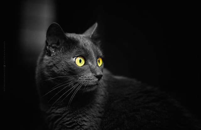 de szép macska vagy sanyi