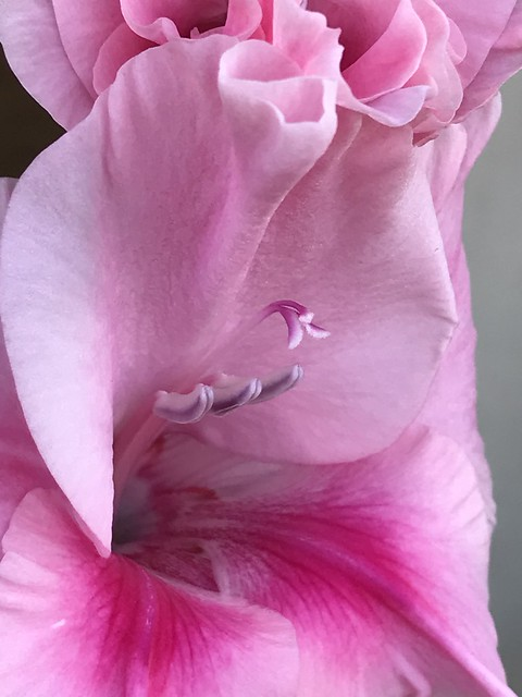Pink Flower Anatomy
