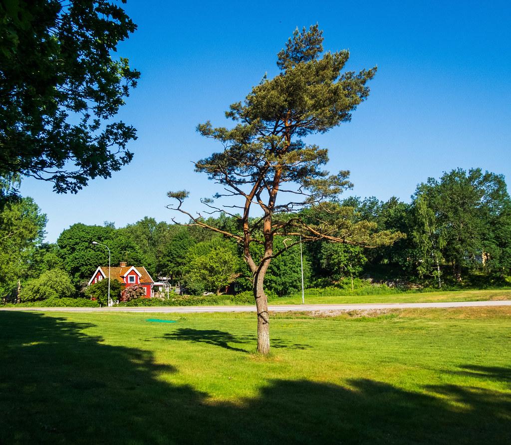 The Pinetree
