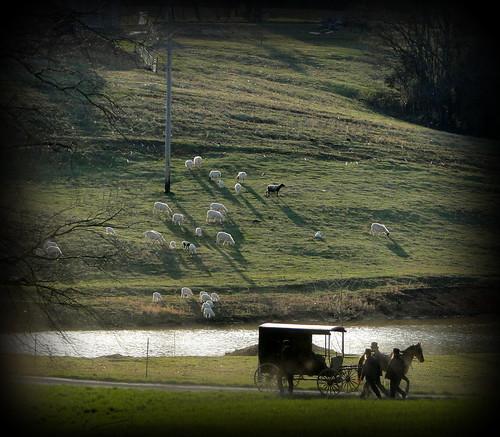 Amish Country Scene