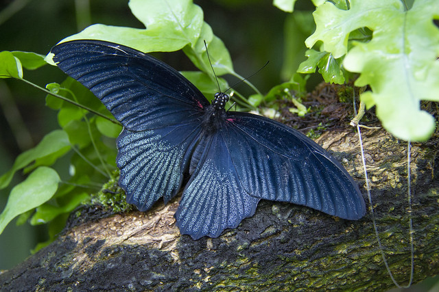 Butterfly Center_61