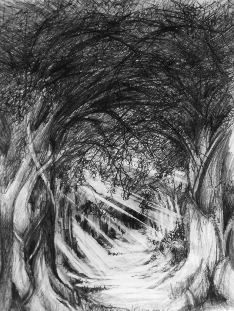 Pencil drawing the woods for more of my work please visi flickr