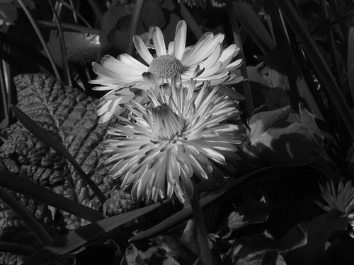 Life in mono | by djania