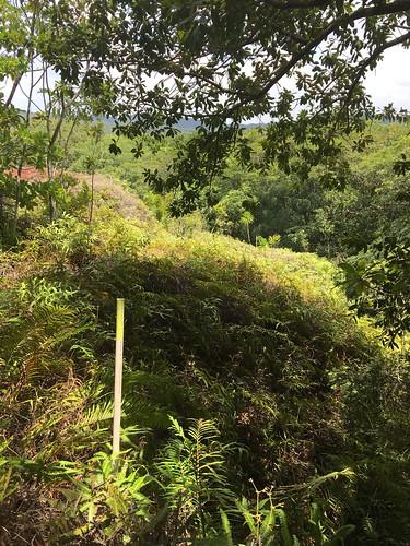 Thu, 08/25/2016 - 11:14 - Ngardok Nature Reserve, Palau