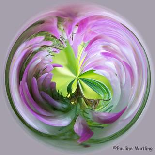 Wild Flower Conversion