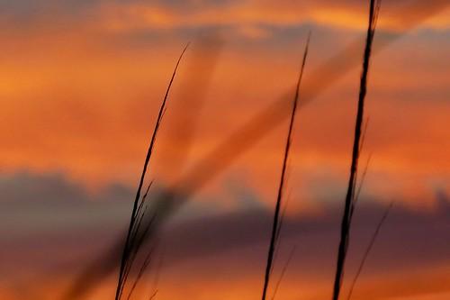 serenityprayer serenity serene peaceful black blue red sunset sky weeds beach
