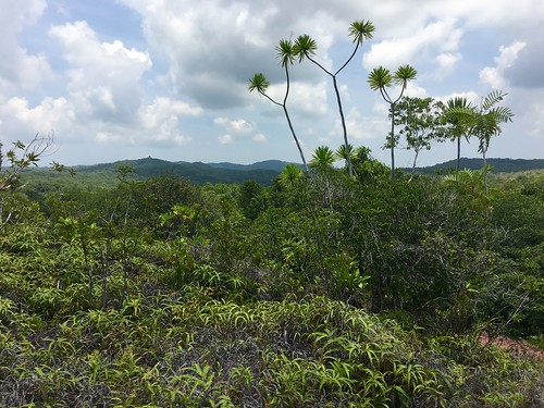 Thu, 08/25/2016 - 11:36 - Ngardok Nature Reserve, Palau