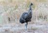 Emu by Stewart M