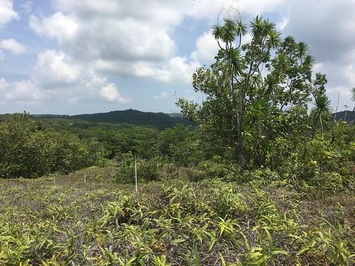 Thu, 08/25/2016 - 11:33 - Ngardok Nature Reserve, Palau