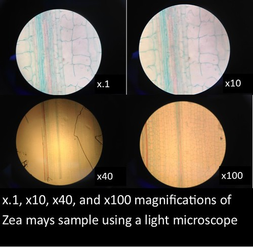 zea light microscope