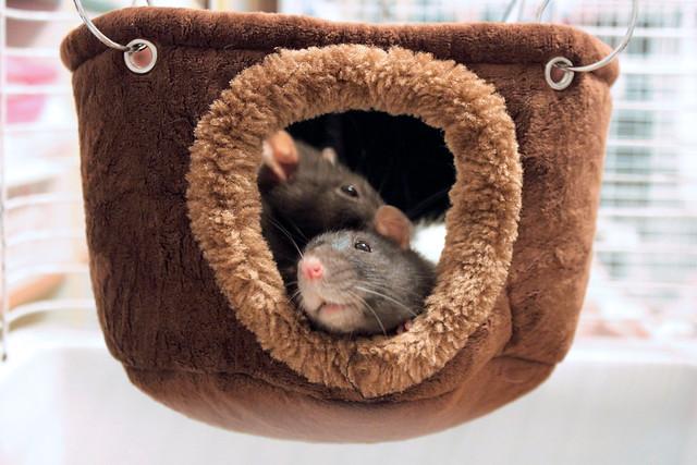 Daisy & Clowie - Fun in the hammock