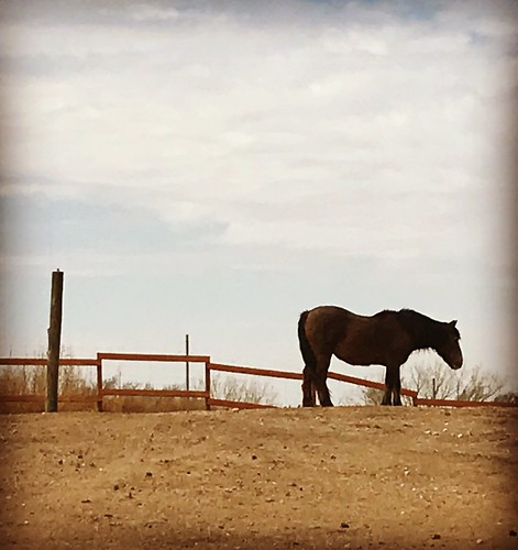 horse amarillo amarillotexas ranch cowboy western southwest texas springbreak march2018