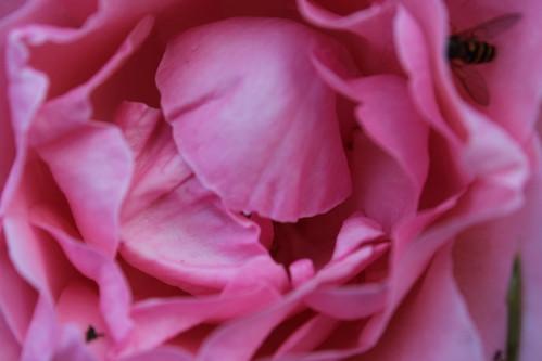 petali scapigliati