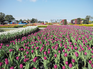 Sea of tulips at Zhong She Toursight Flower Market 中社观光花市 | by huislaw