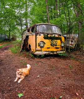 Junkyard cat and VW | by Ed Rosack