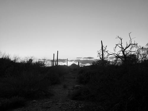desertlandscape saguaro sunset
