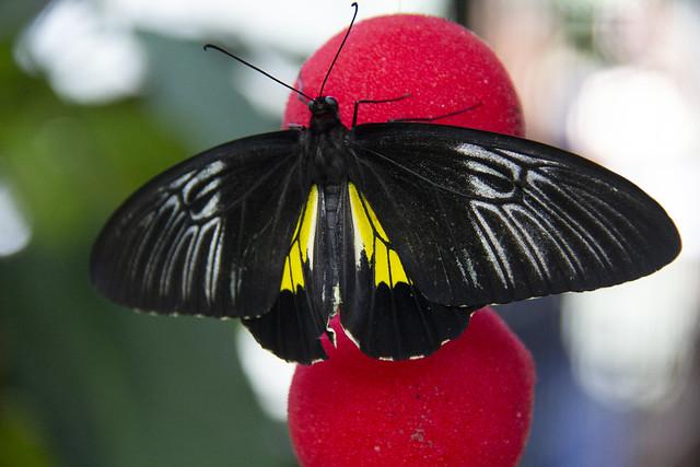 Butterfly Center_62