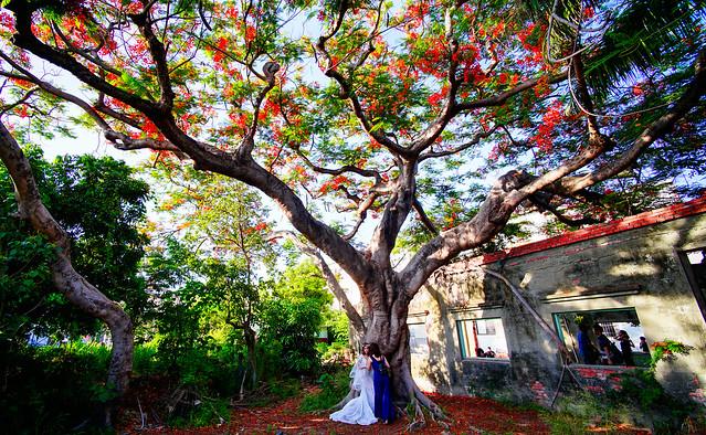 鳳凰花下的婚紗女孩 | 高雄 湖內 番茄會社