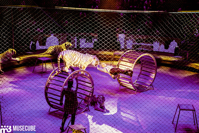 только актеры цирка на вернадского фото советы рекомендации помогут
