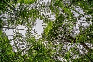 Fern Forest | by terencerees