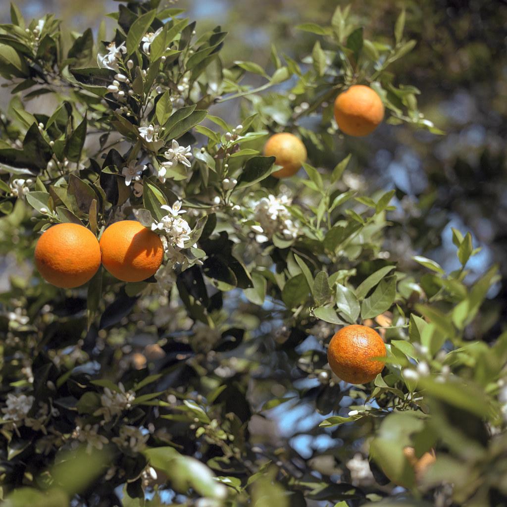 Orange is the Happiest Colour
