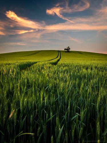 cirrus clouds fields landscape lonetree longexposure nature sunset tree crop hill bucks