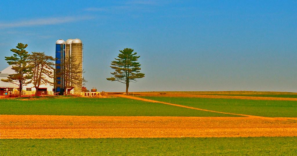 silos and tree