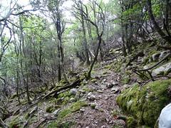 Le chemin du Finicione RG entre le Finicione et le Quarciteddu sur le tronçon retrouvé et restauré (non tracé sur IGN)