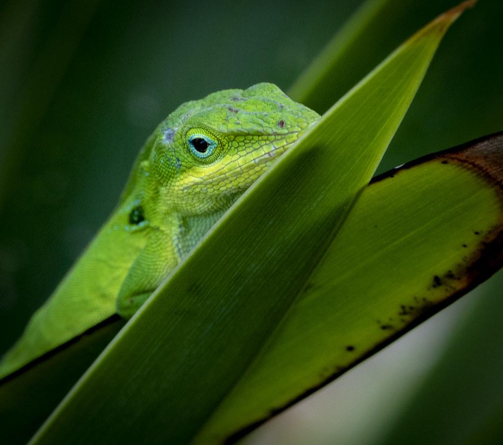 20180525-SH5D8864 | Botanical Garden, Punta Gorda, FL ...