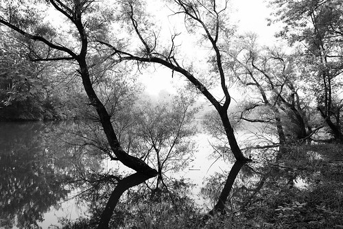 maryland riverbank river trees flood water silhouettes patapsco nikon d750 tamron monochrome blackandwhite landscape fog mist forest