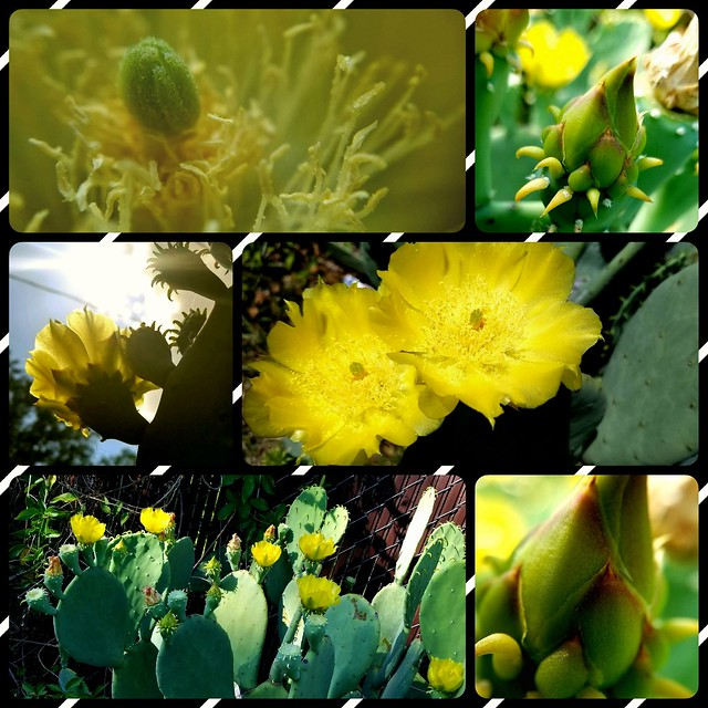 Collage of yellow