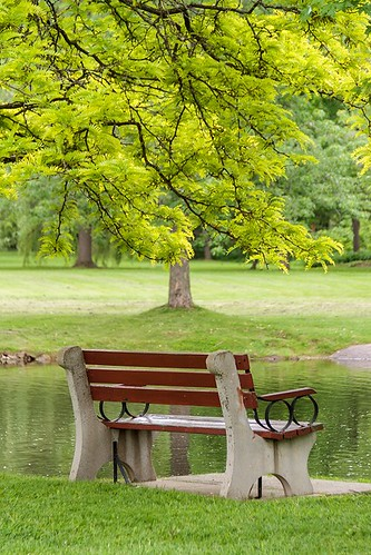 bench seat green tree park travel perth ontario canada landscape scenery scenic water leaves