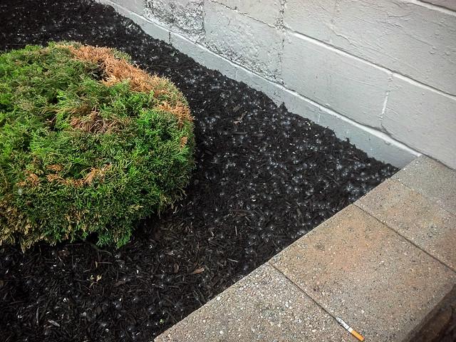 corner shrubbery