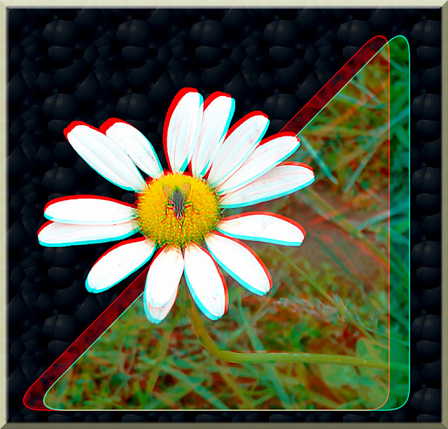 Fly on Flower 2 - Anaglyph 3D