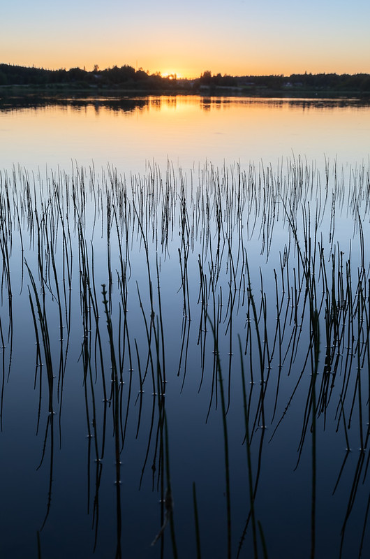 Iso Järvi