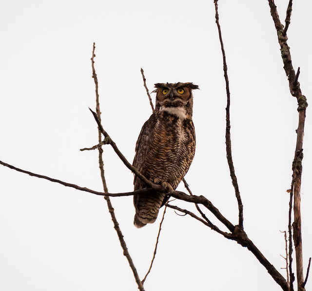Flickr: The Indiana Owls Pool