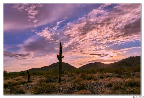 arizona buckeye cacti cactus clouds cloudscape cloudy desert kenmickelphotography landscape landscapedesert outdoors plants saguaro sky skylineregionalpark sunsets nature photography sunset unitedstates us