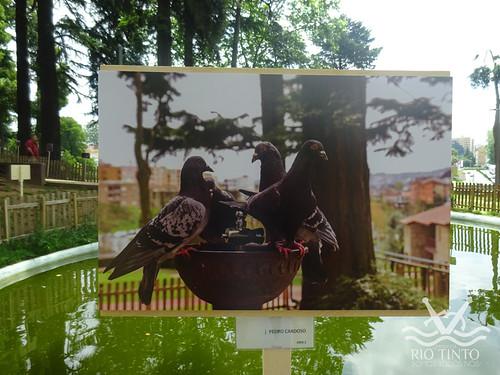 2018_06_02 - Inauguração da exposição de fotografias e entrega de prémios (135)