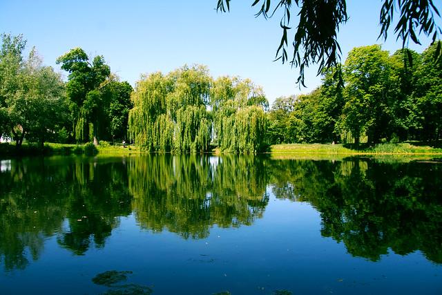 A small pond in the park near the Berzhinsky-Tereshchenko palace. Andrushivka.