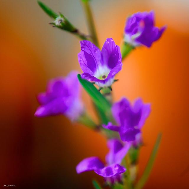 Una minúscula flor