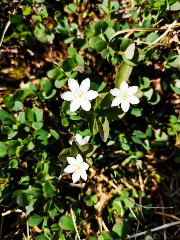 18-Blomst