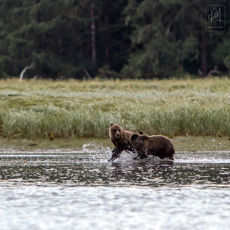 Dream Grizzly Trip - Day Two