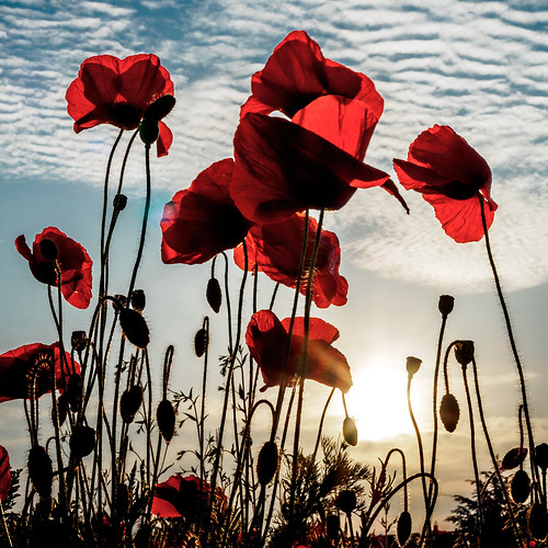 Lest we forget | by terencerees
