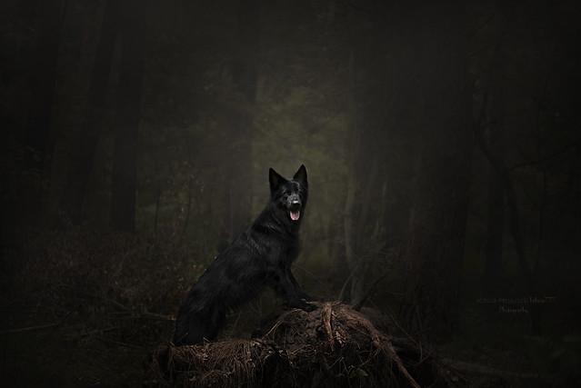 dark beauty in a dark forest