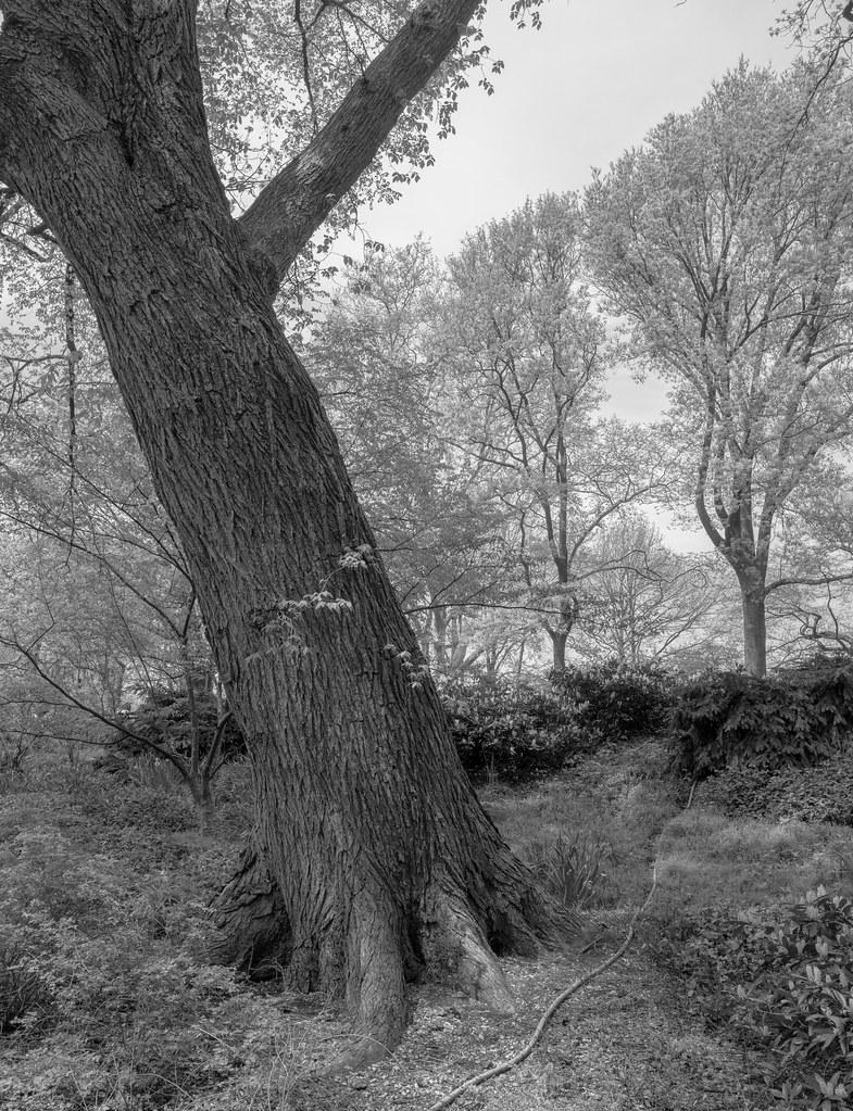 CentralParkTrees-1