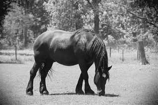 Horse, Kline Creek Farm. 16 (EOS)