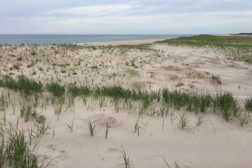 beach dunes seagrass eelgrass beachgrass grass view summer cloudy overcast wave waves water sea ocean beaches coast coastal coastline dune sanddunes sand vacation holiday tour tourism visit