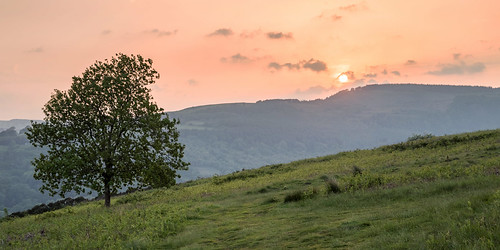 lonetree tree solitary sunset dusk wales southwales cilfynydd pontypridd valley landscape outdoors haze red sky nature
