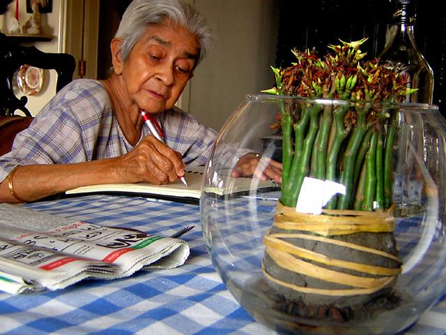 grandma's diary